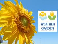 Weather Garden